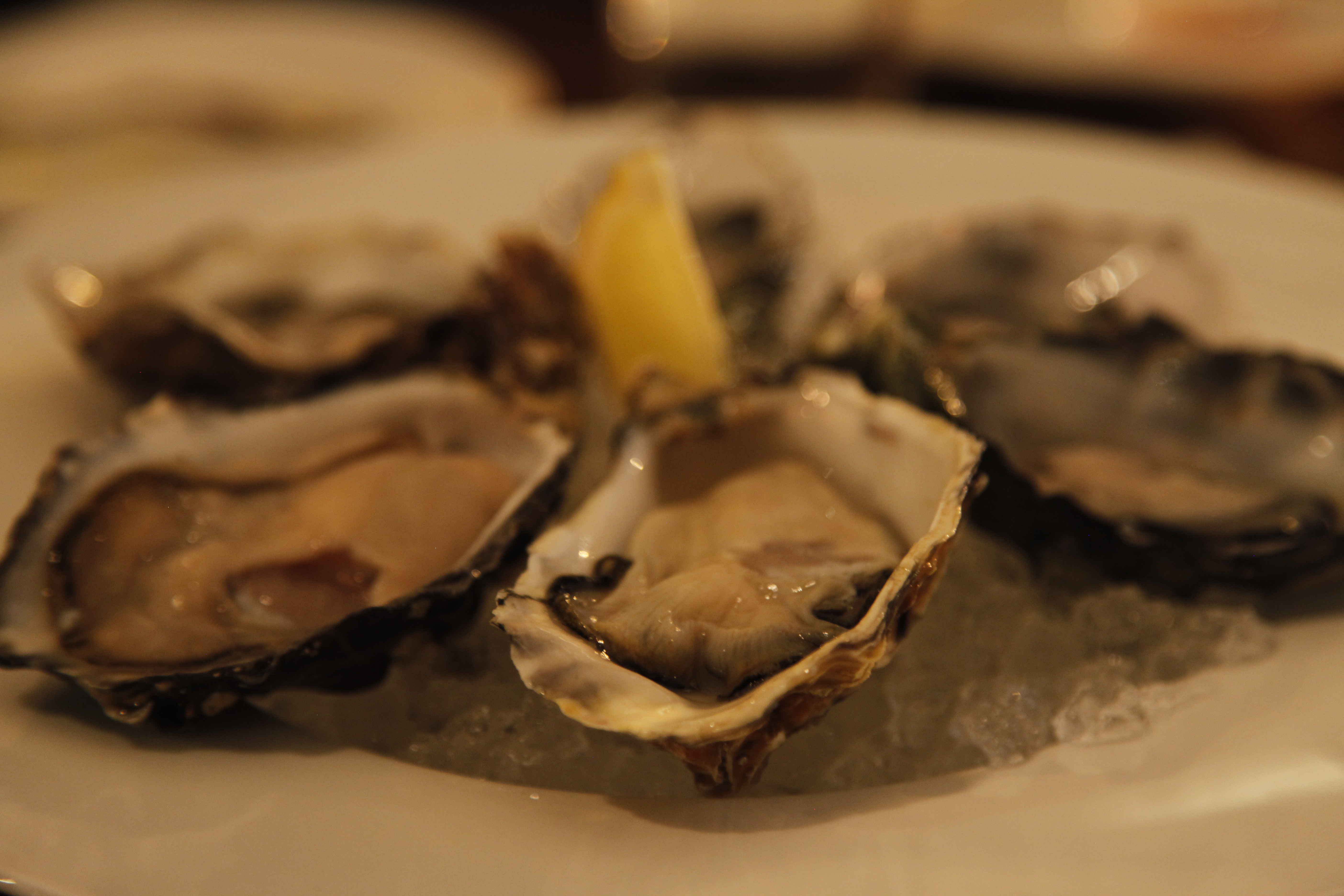 Sucullent oysters from across the world