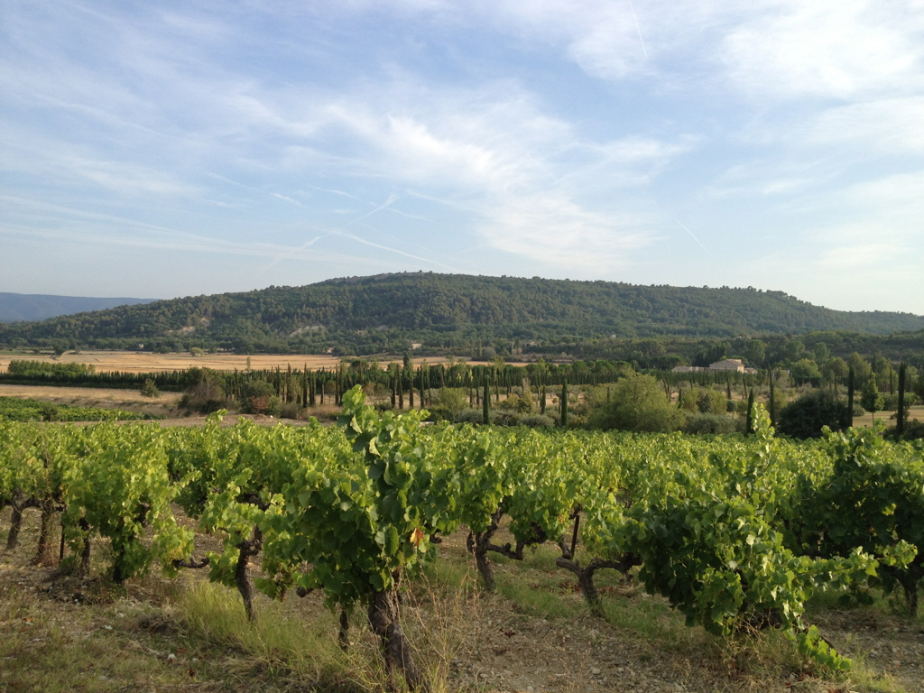 The vineyards of Luberon