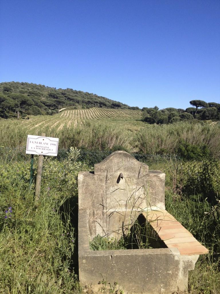 Domaine La Touraque vineyards