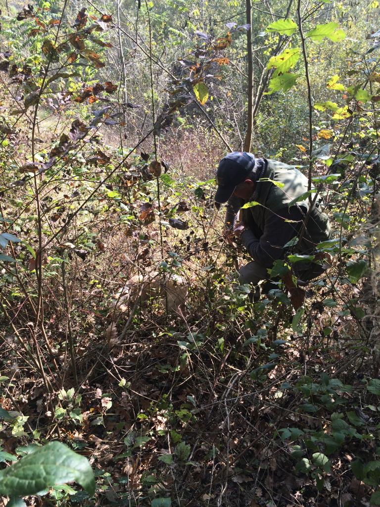 Truffle search in La Morra in Piedmont