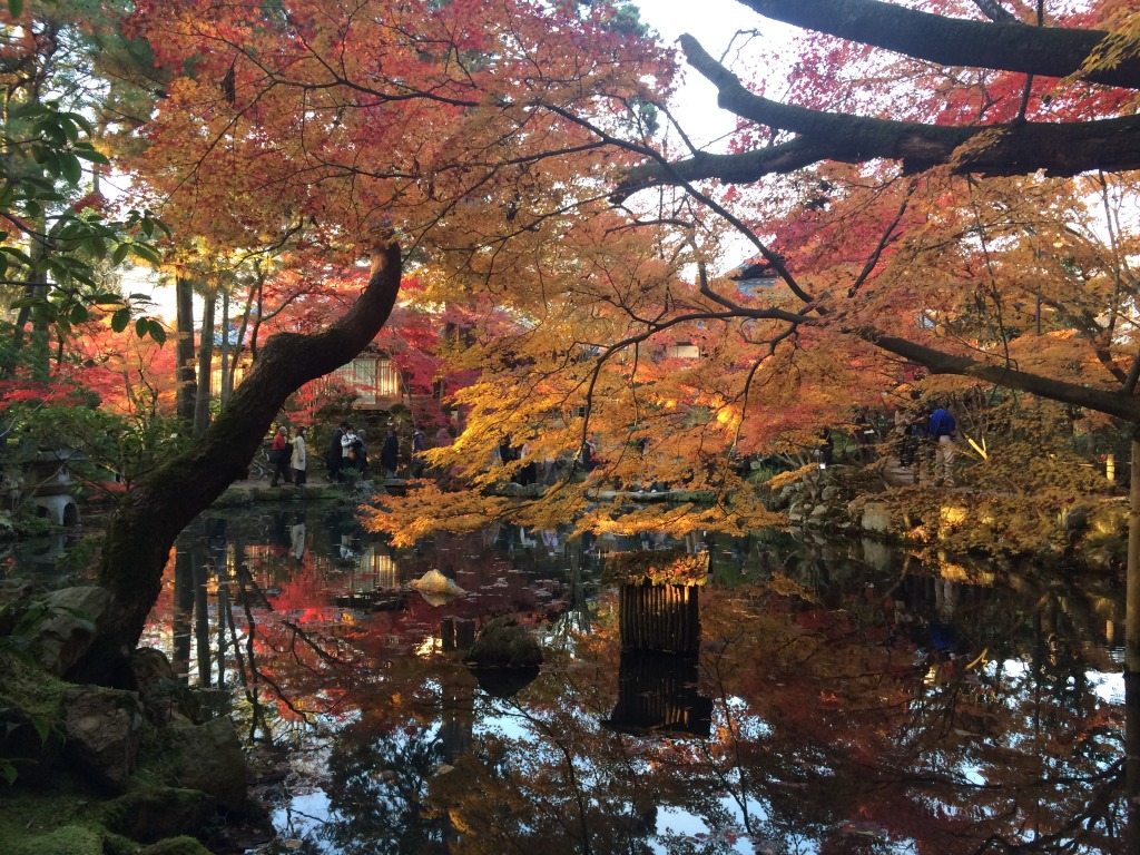 Autumnal changing of leafs' colours in Japan